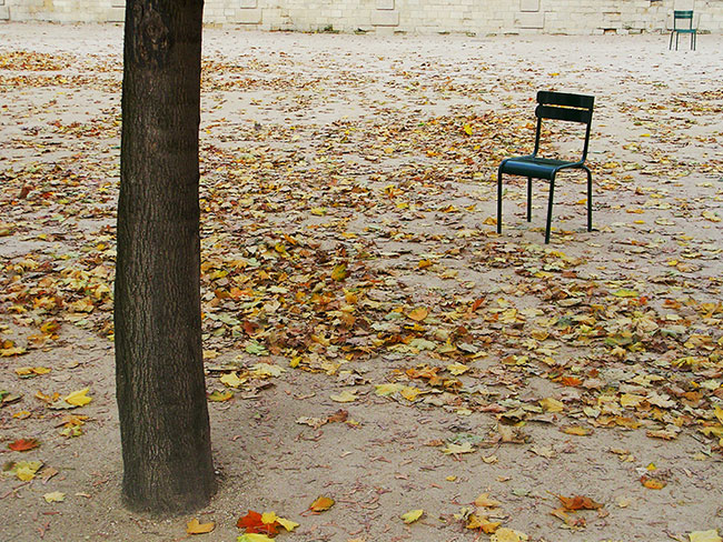 a tree and two chairs